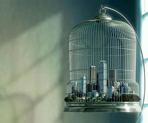 city and cage image