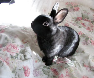 cute, bunny, and black image