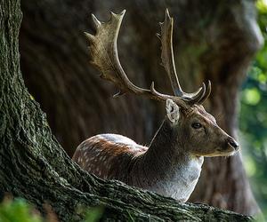 animal, deer, and fire image