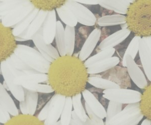 flowers, header, and twitter image