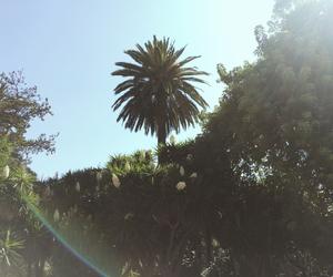 Barcelona, palmtree, and spain image