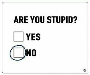 stupid, funny, and no image