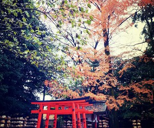 asia, flower, and japan image
