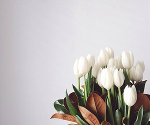 wallpaper and tulips image