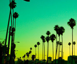 photography, summer, and california image