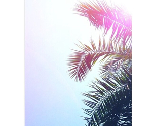 california, palm tree, and pink image