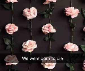 Lyrics, lana del ray, and we were born to die image