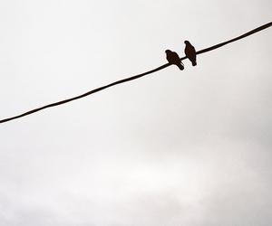 b&w, bird, and birds image