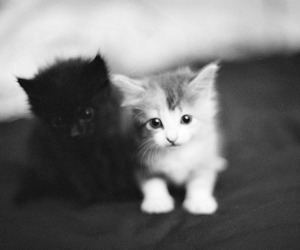black and white, cat, and sweet image