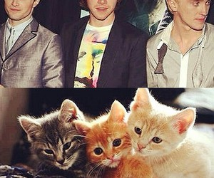 daniel radcliffe, draco malfoy, and rupert grint image
