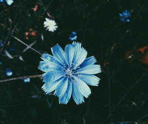 blue, flowers, and tumblr image