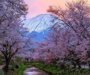 japan, mountain, and sakura image