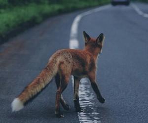 fox, animal, and road image