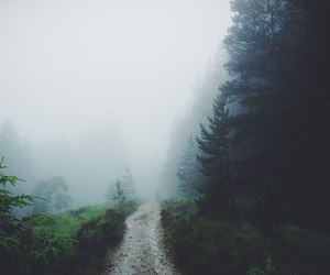forest, nature, and fog image