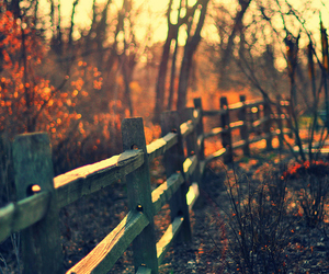 autumn, nature, and photography image