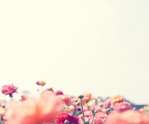 background, nature, and floral image