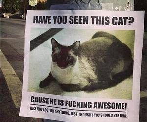 cat, funny, and awesome image