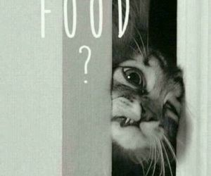 food and cat image