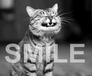black and white, cat, and smile image