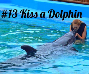 dolphin, happy, and wish image