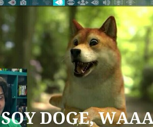 doge, ust, and youtuber image