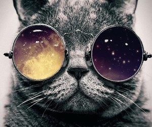 cat, dope, and shades image