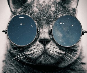 cat, dope, and kitty image