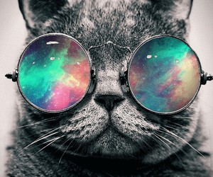 cat, glasses, and galaxy image