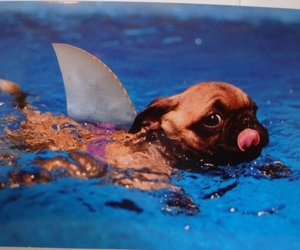 cute, dog, and shark image