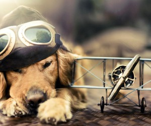 dog, animal, and airplane image
