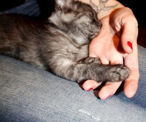 cat, fingers, and hand image