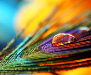 feather, drop, and peacock image