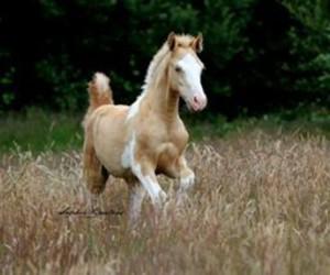 love horse poulains image