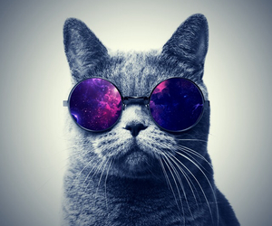 cat, sunglasses, and spacecat image