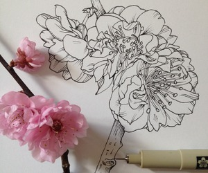 flowers, drawing, and art image