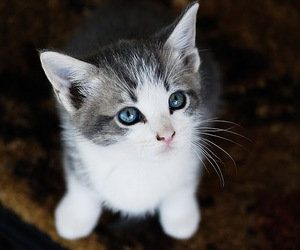 cats, animals, and cute image