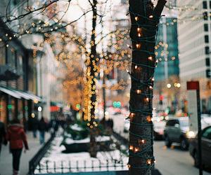 light, tree, and city image