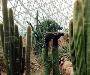 cactus, grunge, and green image