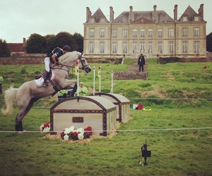 cross country, horse, and jem image