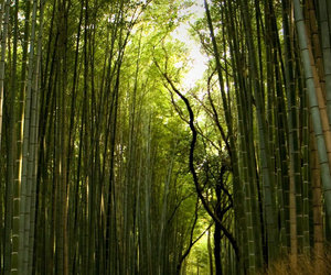 forest, bamboo, and nature image