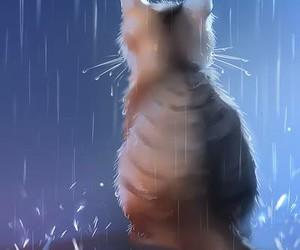 cat, rain, and apofiss image
