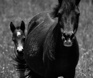horse, cute, and animal image