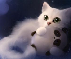 cat and panda image