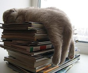 cat, book, and sleep image