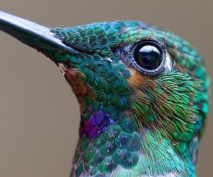 bird, animal, and hummingbird image