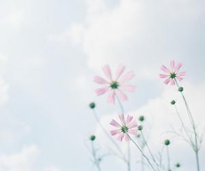 blossom, blue, and film image