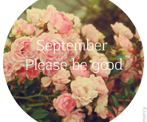 flowers, September, and good image