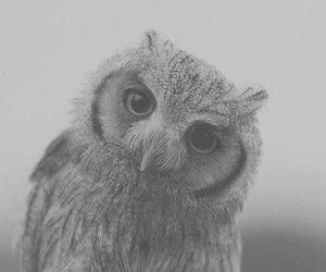 gray, owl, and woods image