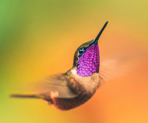 beautiful, hummingbird, and bird image