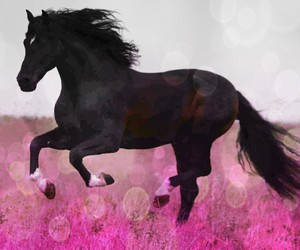 beautifull, black, and cheval image